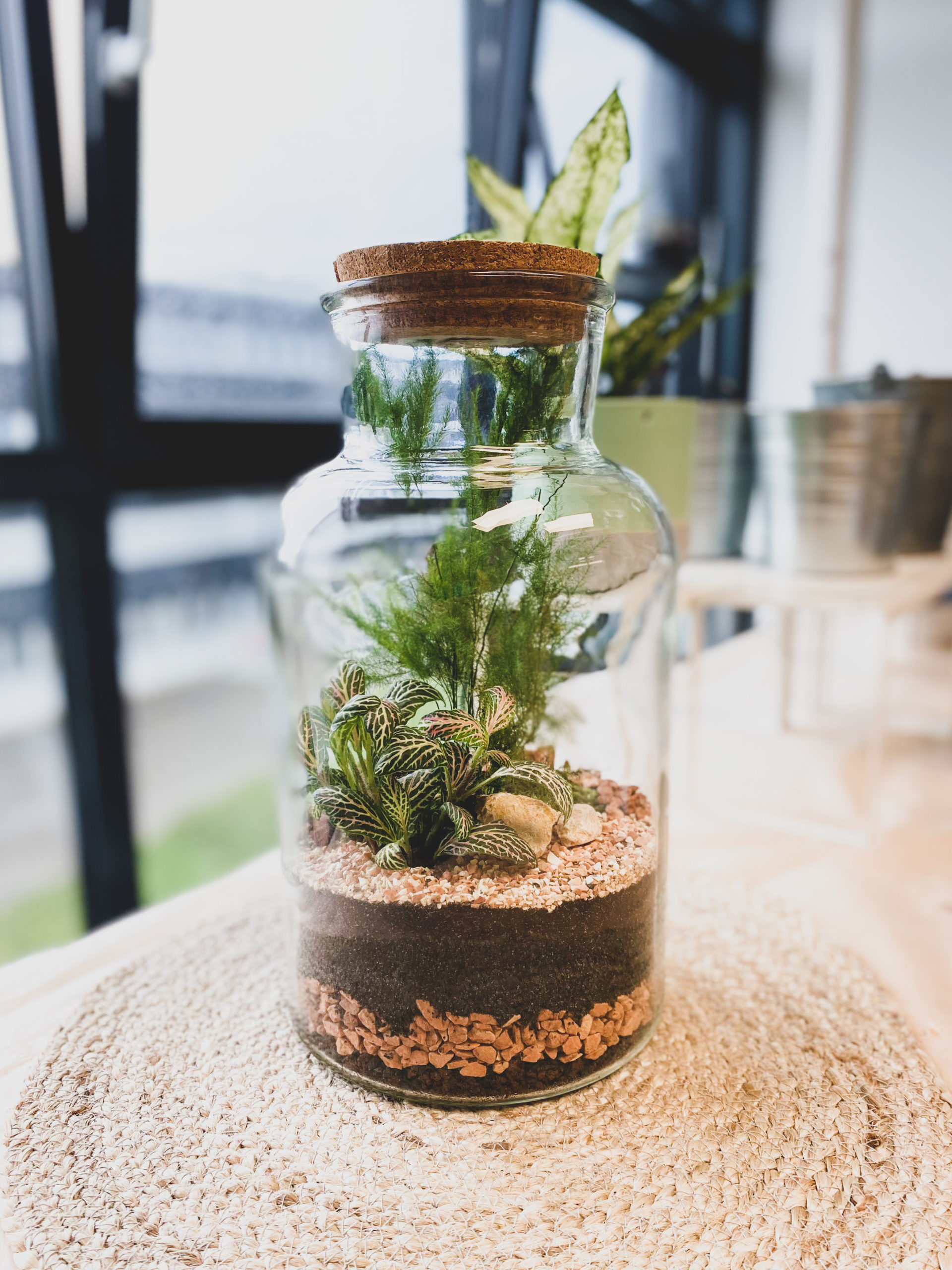 Terrarium Bottle M plantes vertes verre recyclé Tinygarden.ch etoy