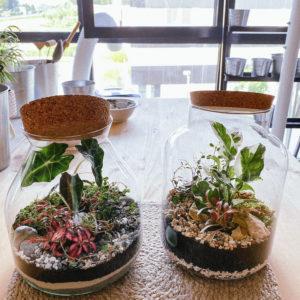 terrarium fermé tinygarden.ch ateliers diy faire soi meme les ateliers de la cote suisse etoy plantes activite